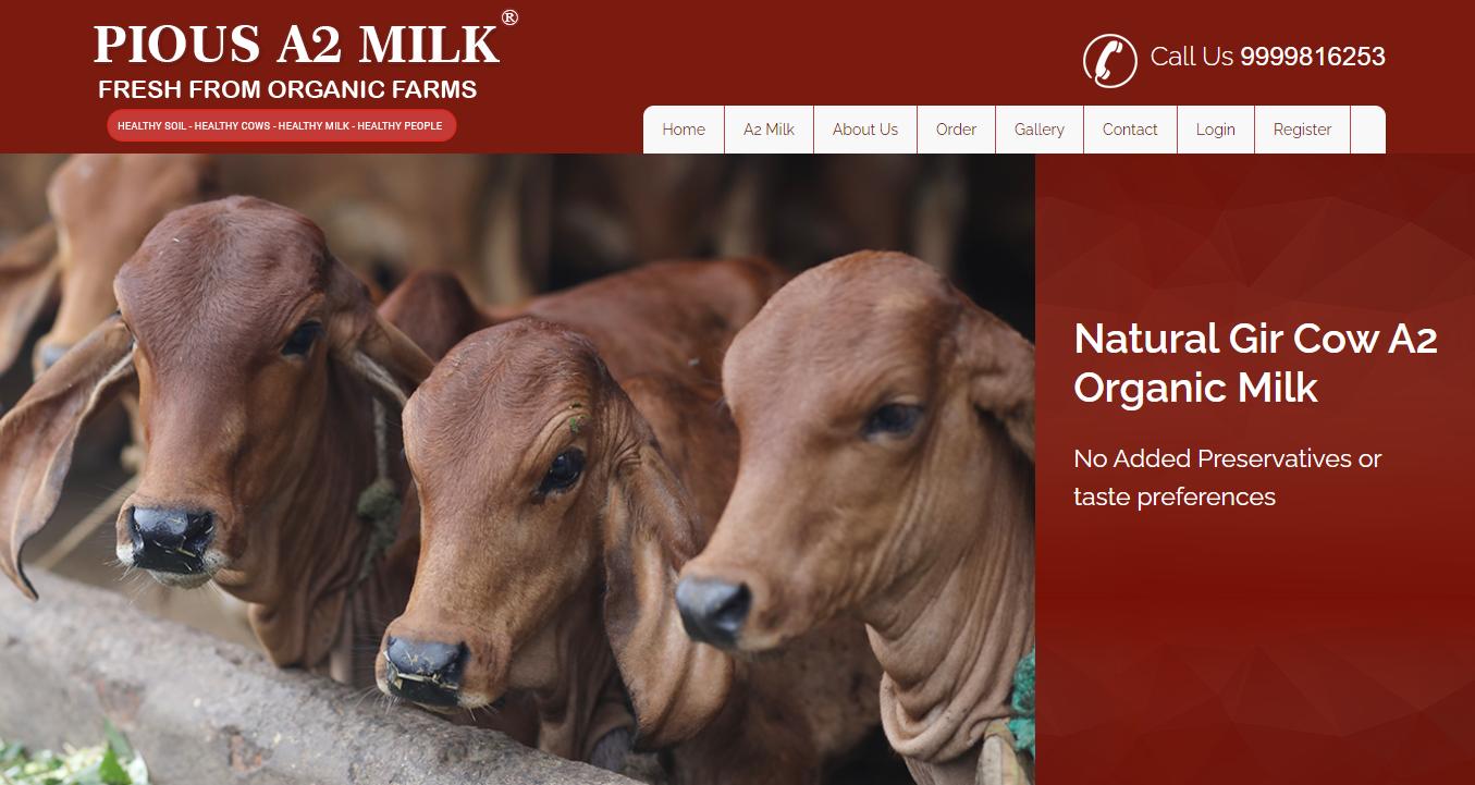 Pious Milk: Desi Gir Cow A2 Milk Noida